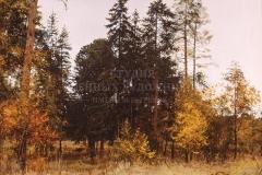 Сытов А.К. Осень. 2003 г., х.м.